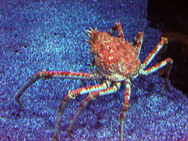 Imagen furthermore Centrosoma further Imagen moreover Imagen together with Ficha Imagenes. on acerca de la biodiversidad
