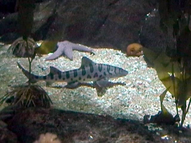 En el acuario - 1 1